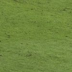 Photo of Lionel Messi kicking a football at the World Cup