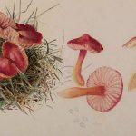 Cute Ecologies: Beatrix Potter, Mushrooms and Miniature Worlds