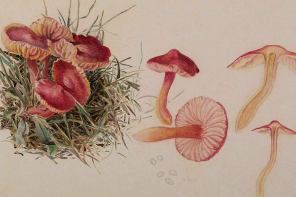 Cute Ecologies: Beatrix Potter, Mushrooms and Miniature Worlds