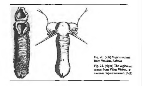 Aristotle and Gender - scientific-style illustration of penis as vagina