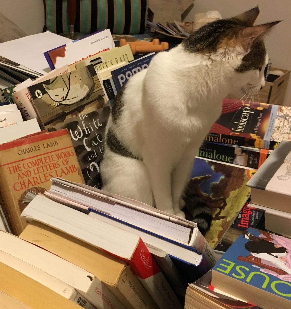 Image of Tobias the Cat amongst books.